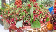 The strawberriy holiday in Bulgaria