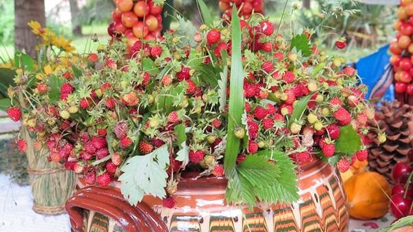 The strawberriy holiday in Bulgaria