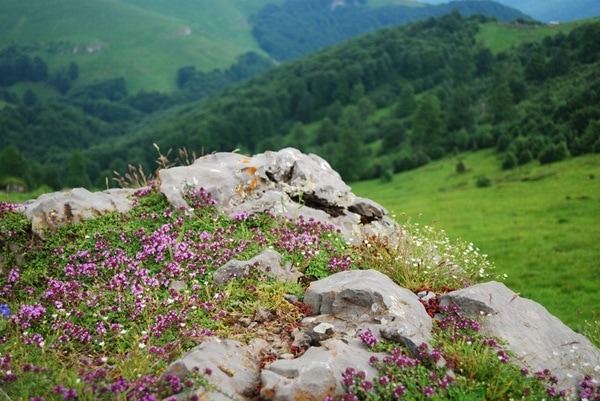 Hiking in Rhodope mountains, Bulgaria