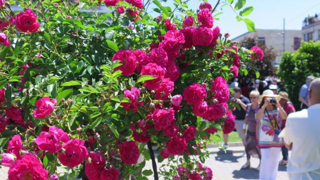 Rose festival, Bulgaria