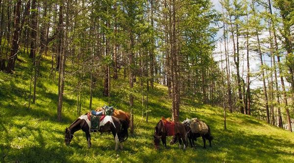 Horse riding in Bulgariaa