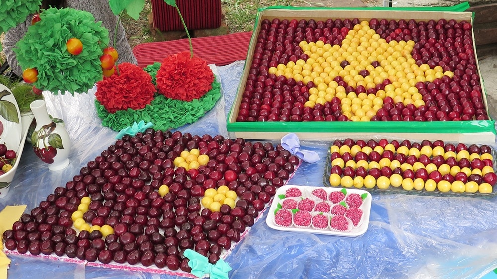 The cherry holiday in Bulgaria