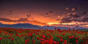 Kazanluk, valley of roses