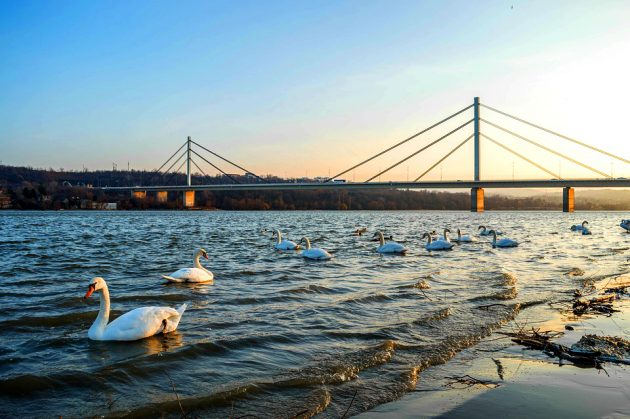 Novi Sad bridge